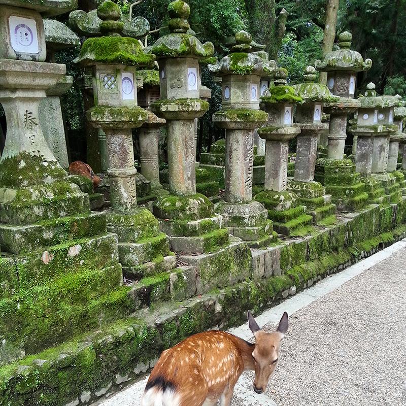 travel japan 9