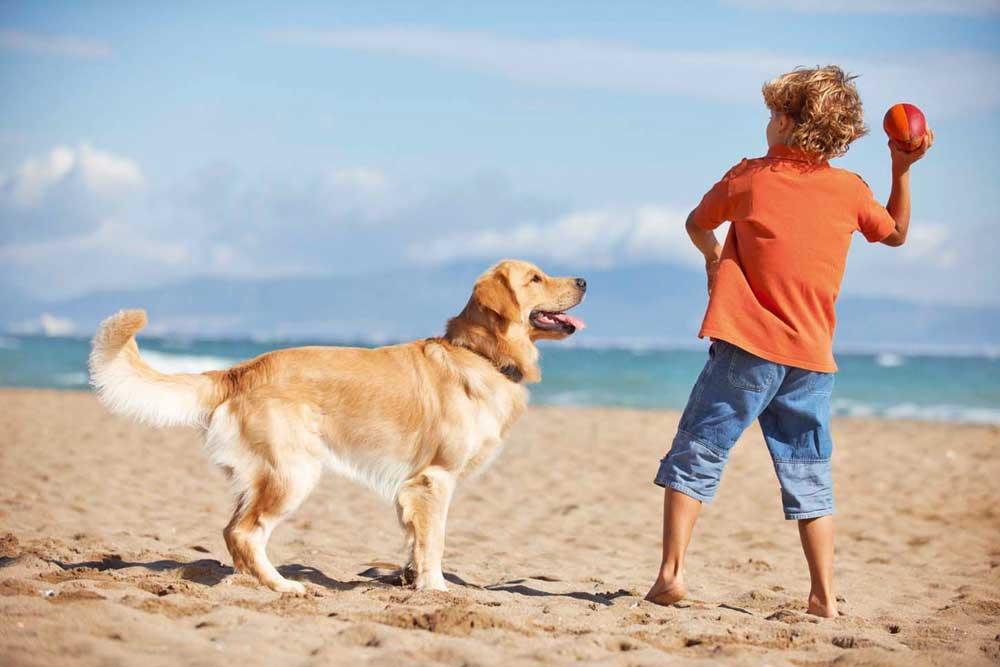 """Scopri come fare felici tanti animali senza casa grazie all'iniziativa """"we are better with pets"""""""