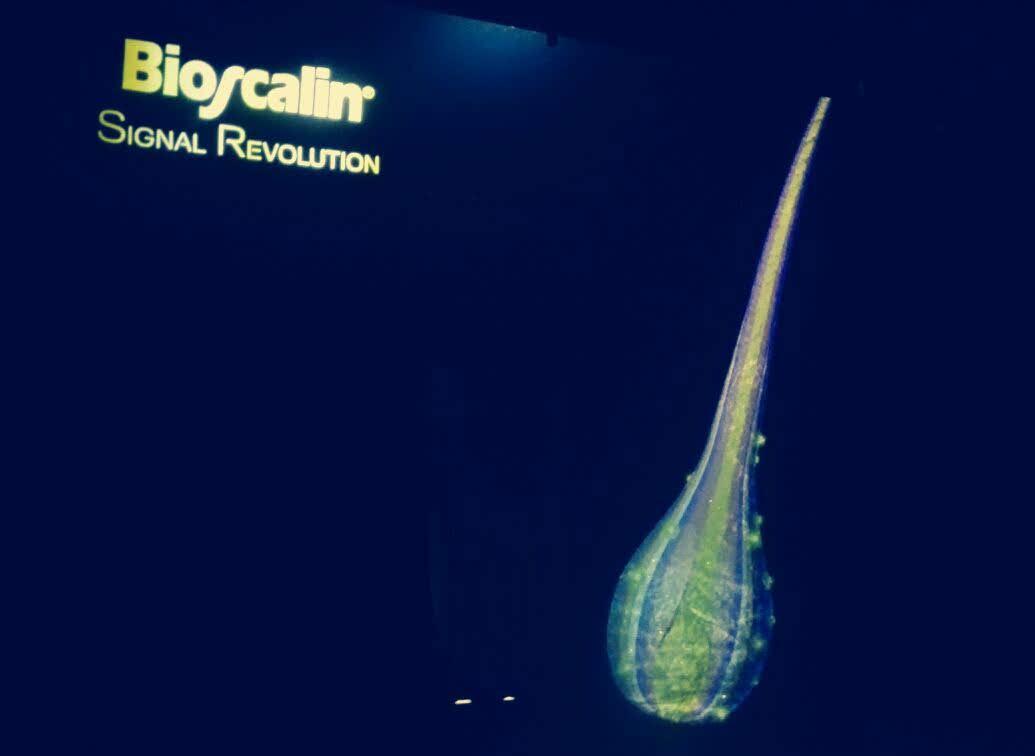 Giuliani con il nuovo prodotto Bioscalin Signal Revolution ha vinto il premio Innovazione e Ricerca CosmoFarma 2017: unico e inimitabile!