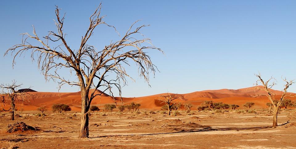 Il Botswana e la sua natura selvaggia